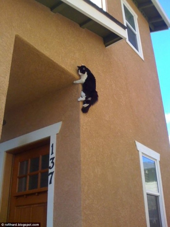A long way down: This ambitious cat thought it would be a good idea to leap from a window and scale a building - but then realised he didn't quite have the guts