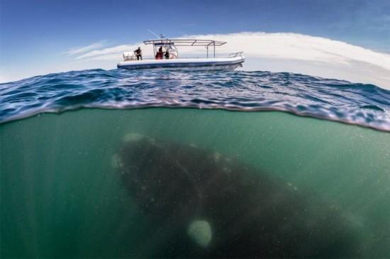 全球壮观摄影展绝美水下世界