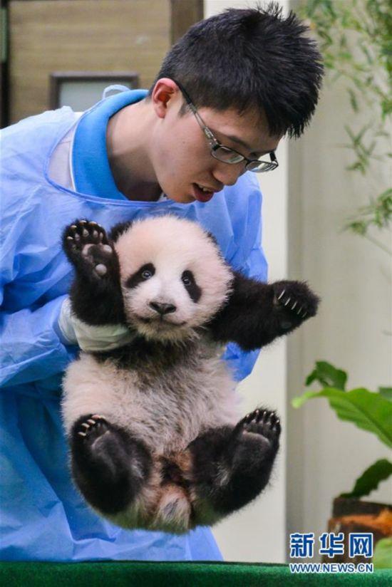 马年宝宝犯几月_中国旅马大熊猫宝宝亮相 体重4.67公斤(高清)