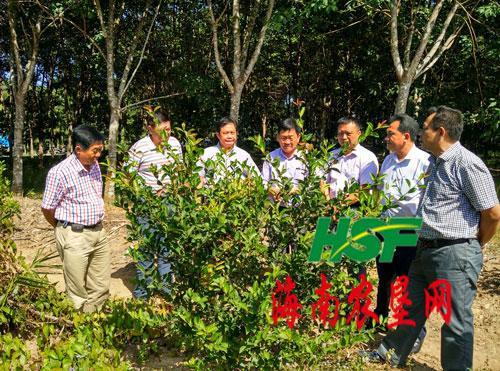 红明农场组队到中坤查看产业项目发展情况