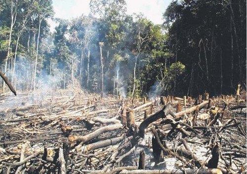 亚马孙森林过半树种因乱砍滥伐濒危