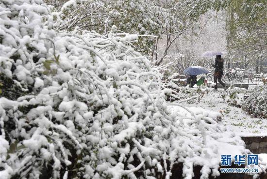 """(生态)(5)北京:""""小雪""""节气雪不小"""