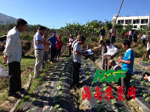 立才農場舉辦黃秋葵種植技術培訓班
