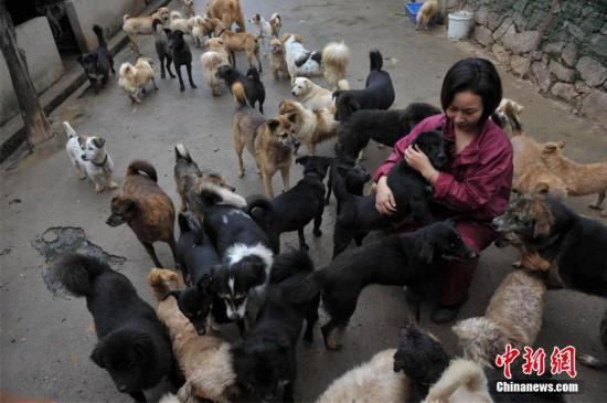武汉流浪动物免费救助站9年救助动物7000余只