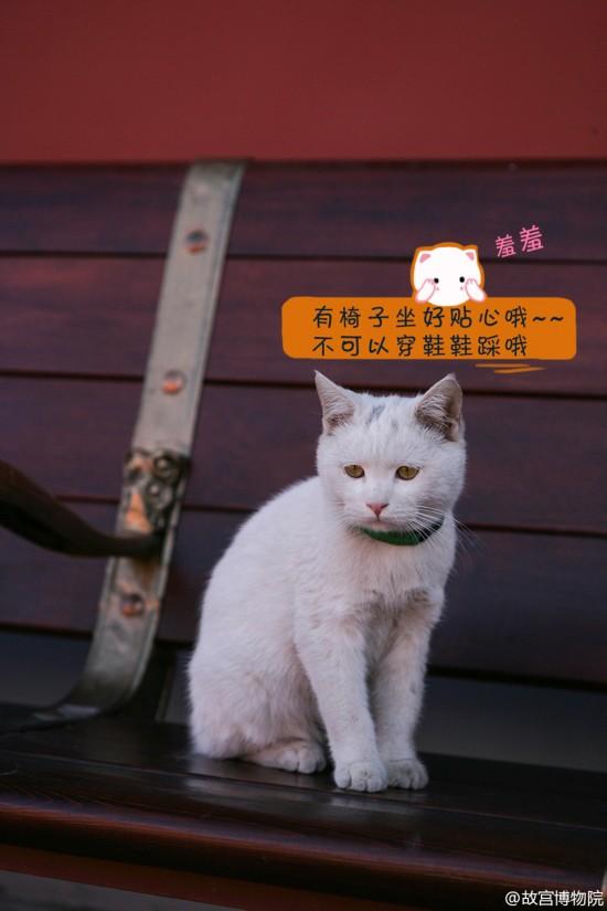 故宫有只小萌猫丝袜起名爱新觉罗壮壮(组拍网友情趣高跟街图片