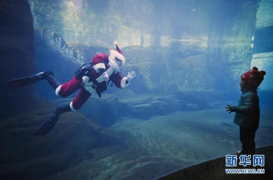 """""""圣诞老人""""现身温哥华水族馆"""