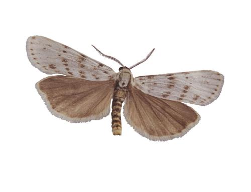 资料图:飞蛾。