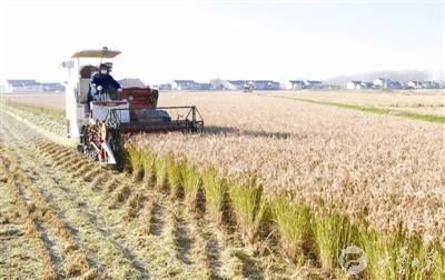 近期盐城大丰天气晴好 农民抓紧时机抢收抢种