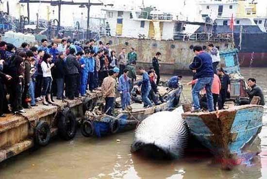 清理污水抓到万吨大鱼 网友震惊'大西洋底来的鱼'