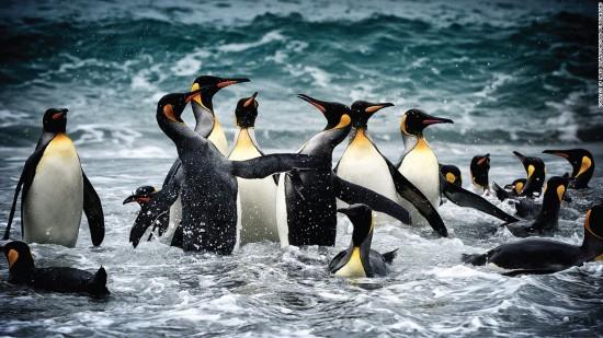 摄影师顶零下90℃极寒拍下南极极致美景