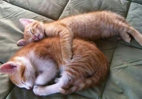女生腹部取出十多厘米长活虫 疑与抱猫睡觉有关