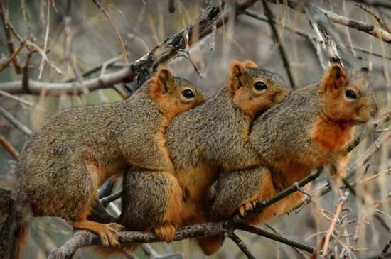 美国3只小松鼠寒冬中拥抱取暖
