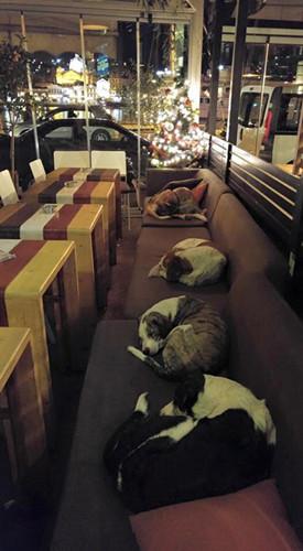 希腊咖啡馆打烊不关门带给流浪狗家的温暖(图)