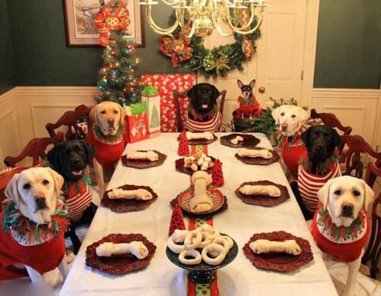美居民为八爱犬精心打扮欢庆圣诞