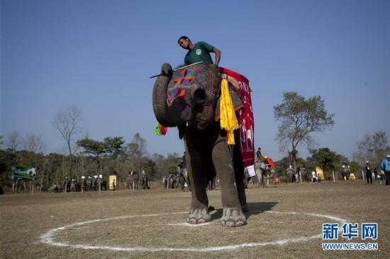 (国际)(4)尼泊尔举办大象选美比赛