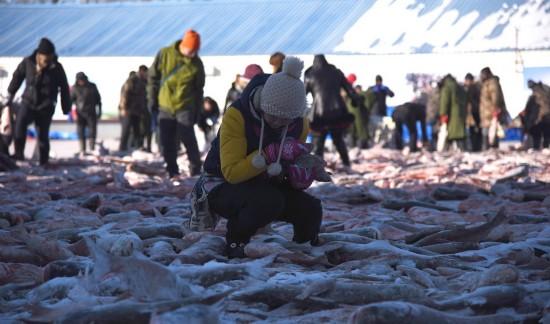 查干湖冬捕 游客冰水中上演搶魚大戰