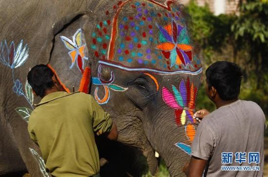 (国际)(3)尼泊尔举办大象选美比赛