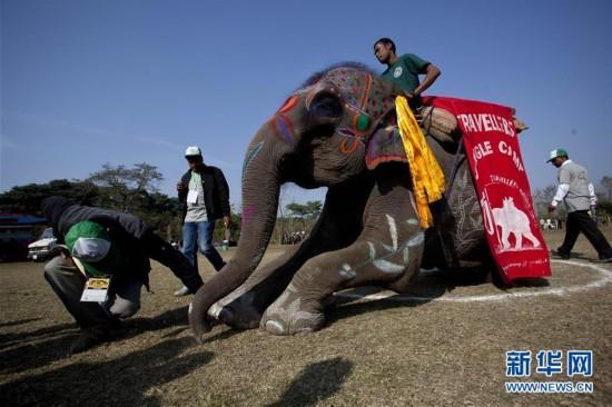 (国际)(1)尼泊尔举办大象选美比赛