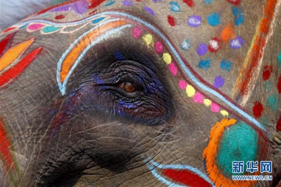 (国际)(5)尼泊尔举办大象选美比赛