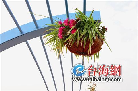 """29日,记者来到漳州龙海九湖公园路段,一睹""""彩虹桥""""的风采.图片"""