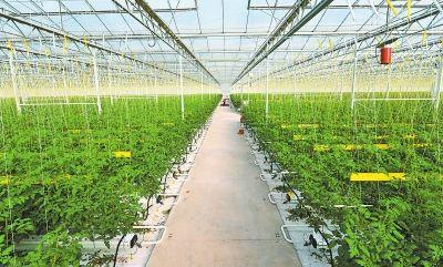 大棚蔬菜种植技术要点,看完受益匪浅