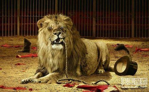 揭秘古代残忍刑法 用动物行刑处死美女太可怕
