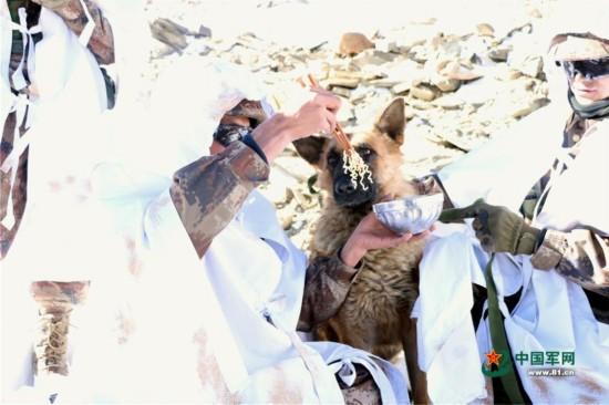官兵-30℃海拔5548米巡边 化雪煮面喂军犬