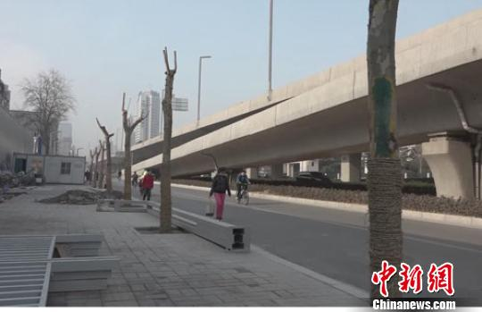 郑州千余行道树回迁引关注官方:成本低成荫早
