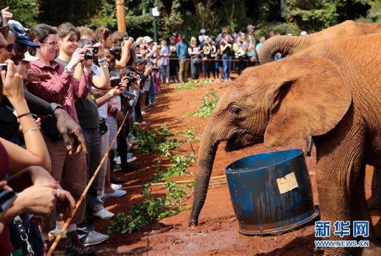 """(国际)(1)大象""""孤儿""""之家"""