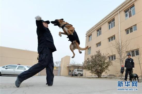 """(晚报)(1)警犬""""年训""""备春运"""