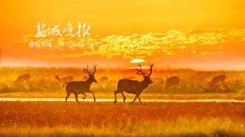 盐城大丰摄影家李玉生:用镜头记录生态之美
