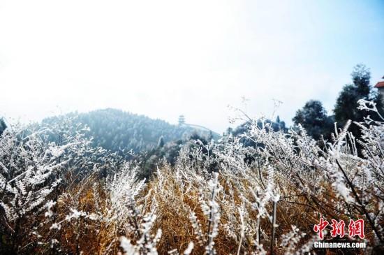 南昌现新年首次雾凇景观 引游客纷至