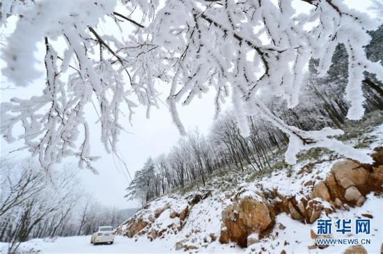 #(生态)(2)湖北保康:雾凇美如画