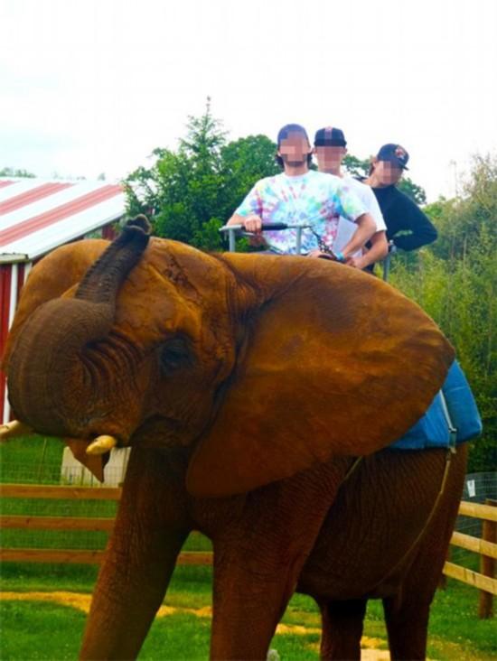 美动物组织曝光北美十大虐待大象残暴动物园