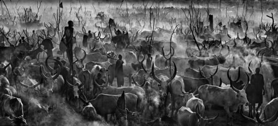 野生动物黑白大片另类之美(组图)