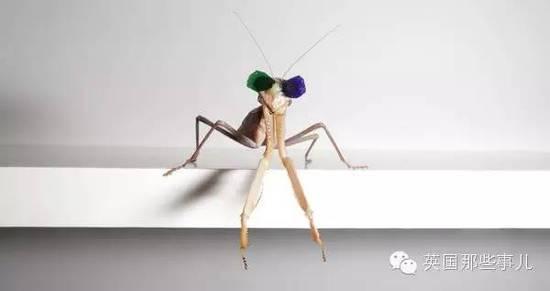 研究团队耗资1000万 给螳螂戴上3D眼镜