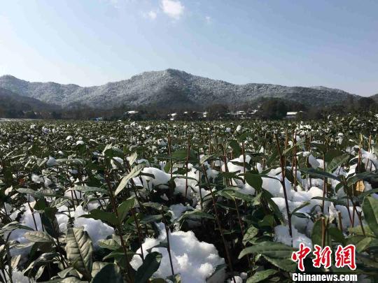 浙江因寒潮受灾49.36万人因灾致直接经济损失4012.5万