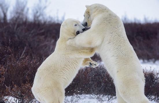 冰天雪地里的小动物们