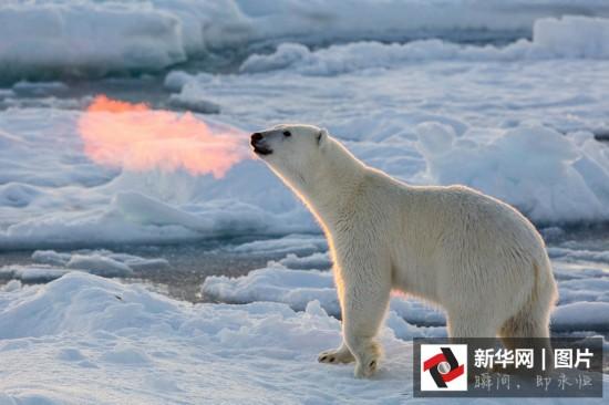 冰天雪地里的小动物们 又萌又好笑