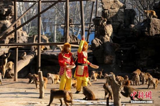 """为郑州动物园上百只猴子举办了一次""""宴会"""",为它们提供干果,水果和蔬菜"""