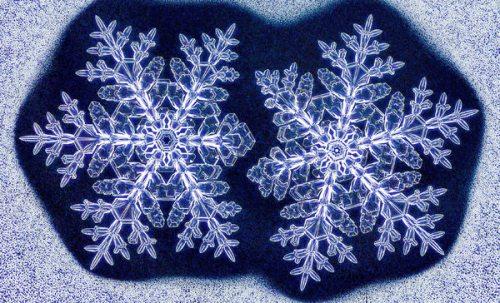 这些在同样环境中并排放置生长出来的双胞胎雪花几乎一模一样。