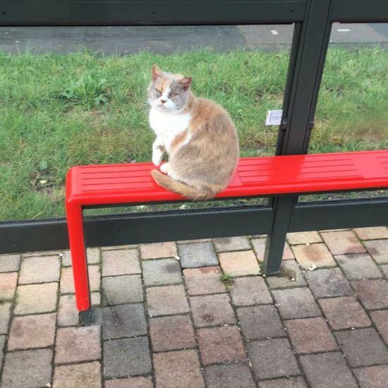 英车站一友善猫咪遭恶意踢打致重伤被迫安乐死