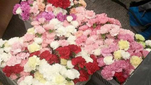 美国校园暖男打工一年半情人节前买花送全校女生