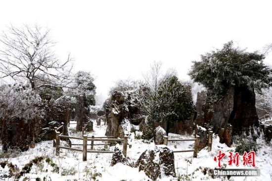 四川华蓥山迎来春节后首场大雪 美景如画
