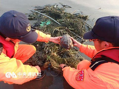 台珍稀动物柴棺龟被渔网困住海巡队员割网救援