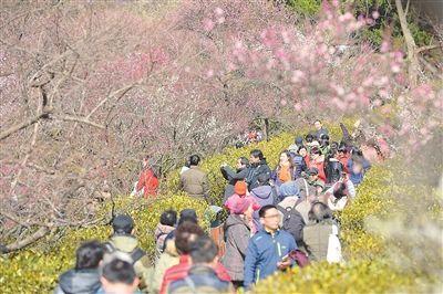 南京国际梅花节16日在梅花山开幕