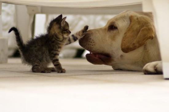 动物间的纯纯友谊 关系这么好真是没sei了