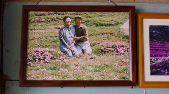 日本老人为失明妻子种出一片花海