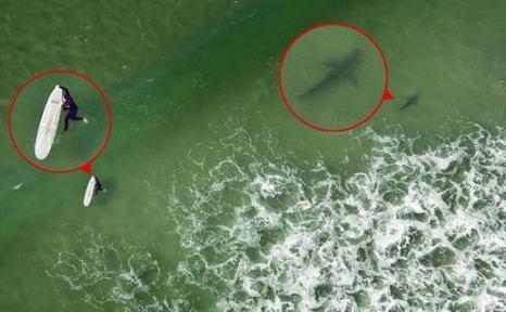 海上冲浪遭遇鲨鱼
