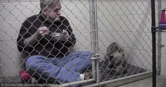 美兽医与流浪狗一起笼内用餐感动无数人